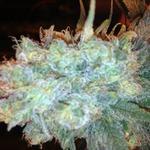 420 Friendly Inc