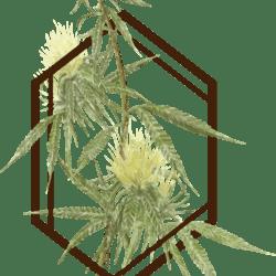 The Botanist - Fargo (Now Open)